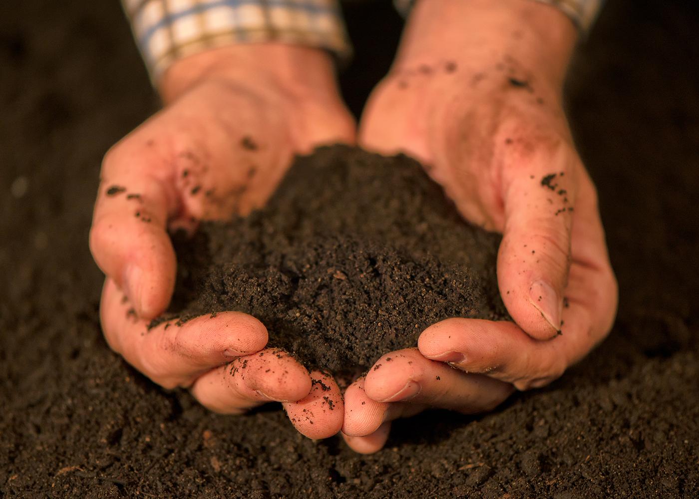Soil Morphology/Describing Soils