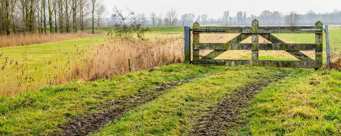 muddy tire tracks in grass