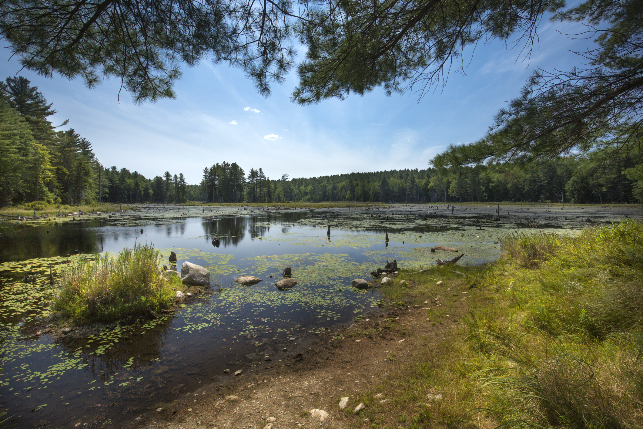 Unraveling the Newly Adopted NHDES Wetland Rules