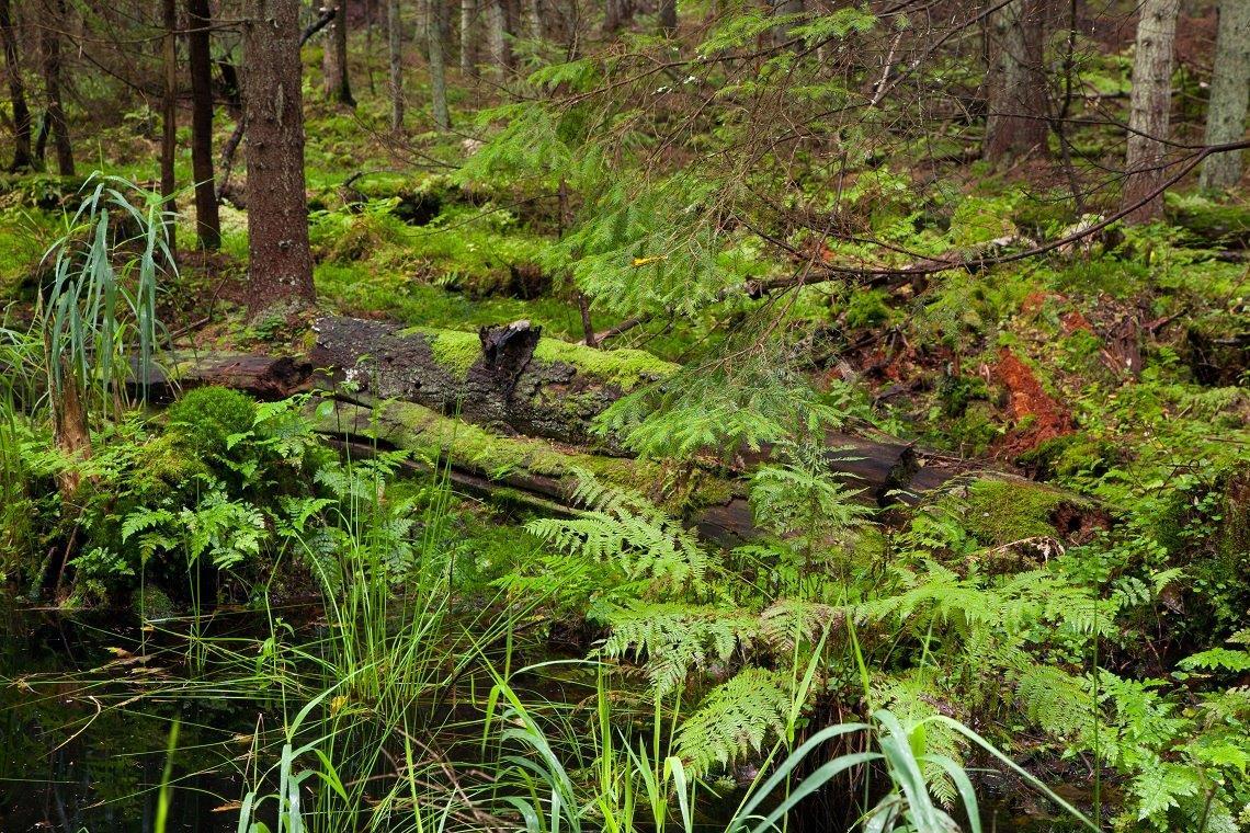 wetland ferns and grasses